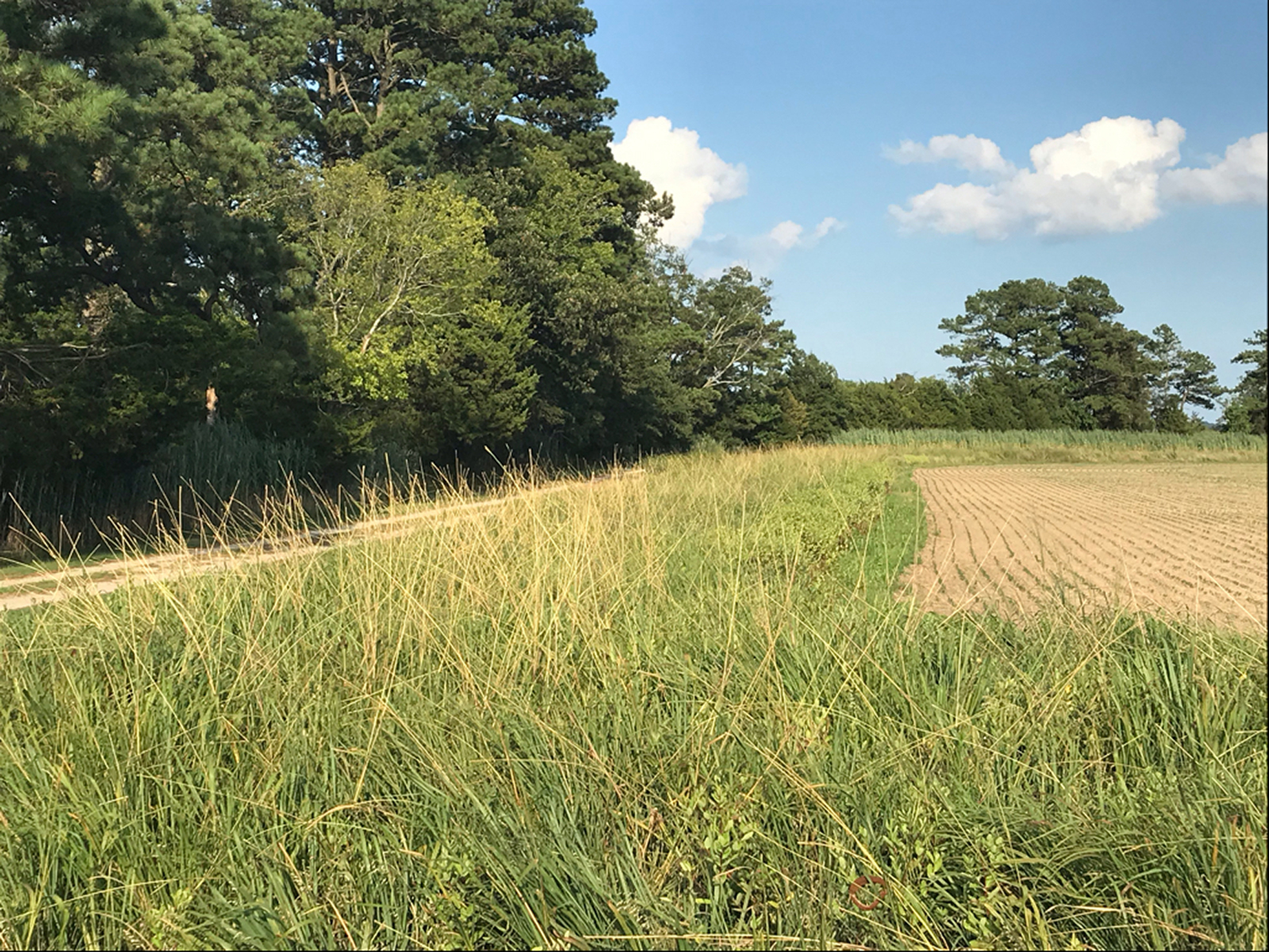 Soybean field more protected by an herbaceous riparian buffer