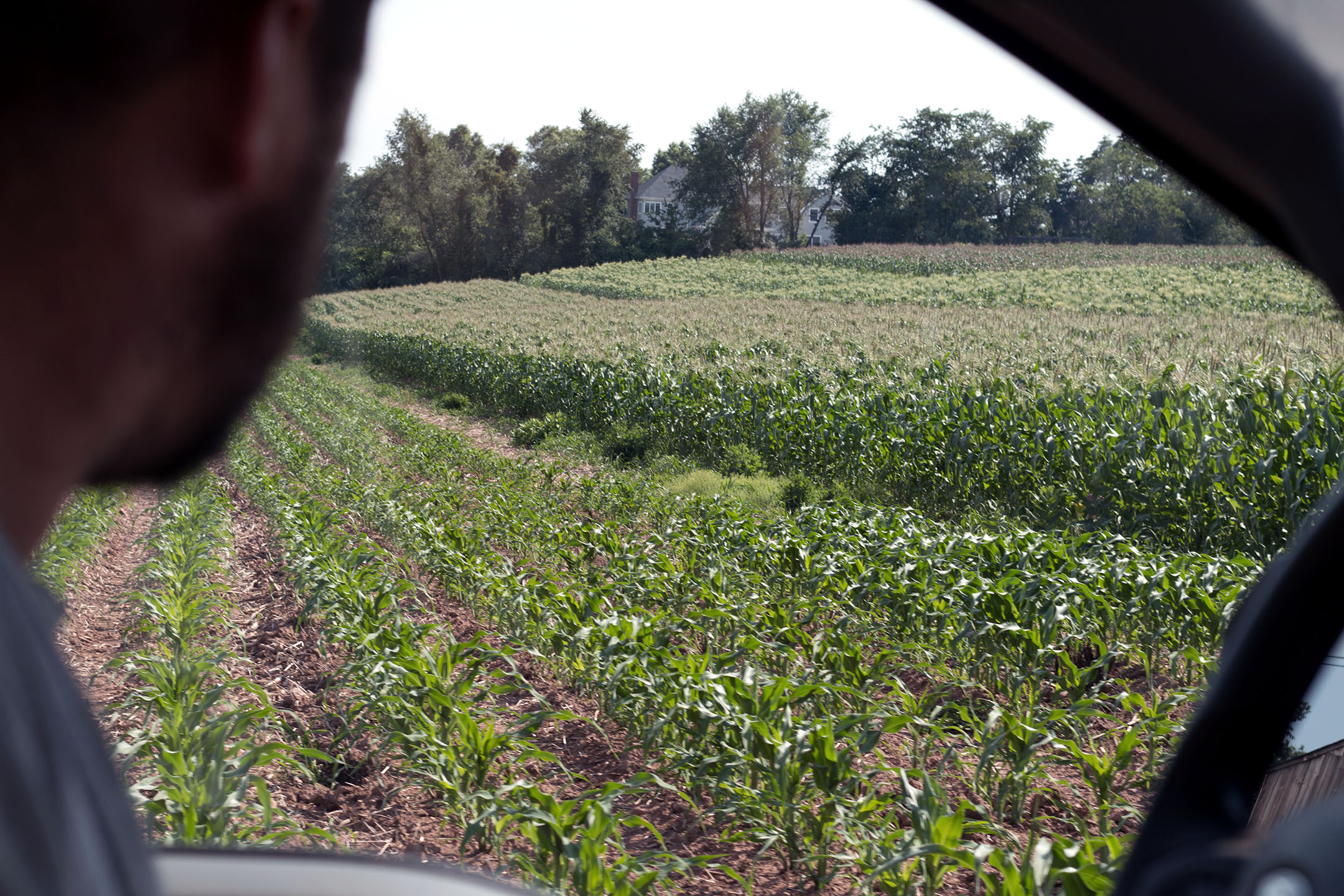 William DellaCamera drives by the corn fields on July 13th, 2018.
