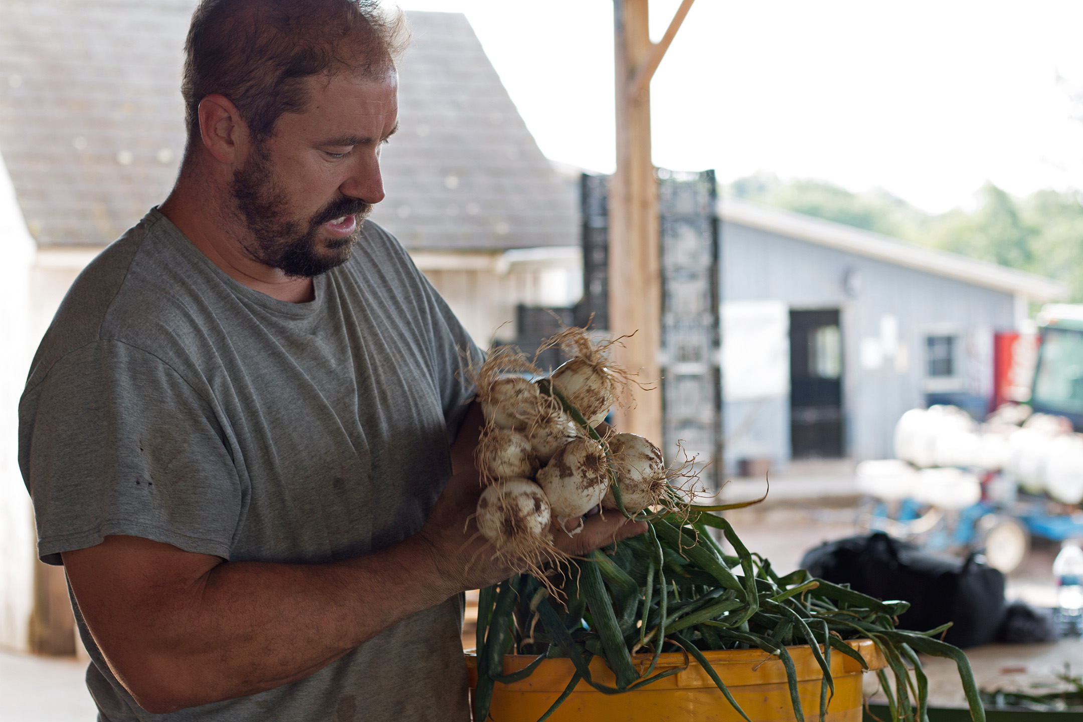 William DellaCamera shows off a bunch of freshly harvested onions on July 13th, 2018.