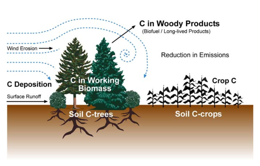 Figure 1: Major carbon sinks and sources that can be affected by a field windbreak. Image credit: Schoenberger 2008