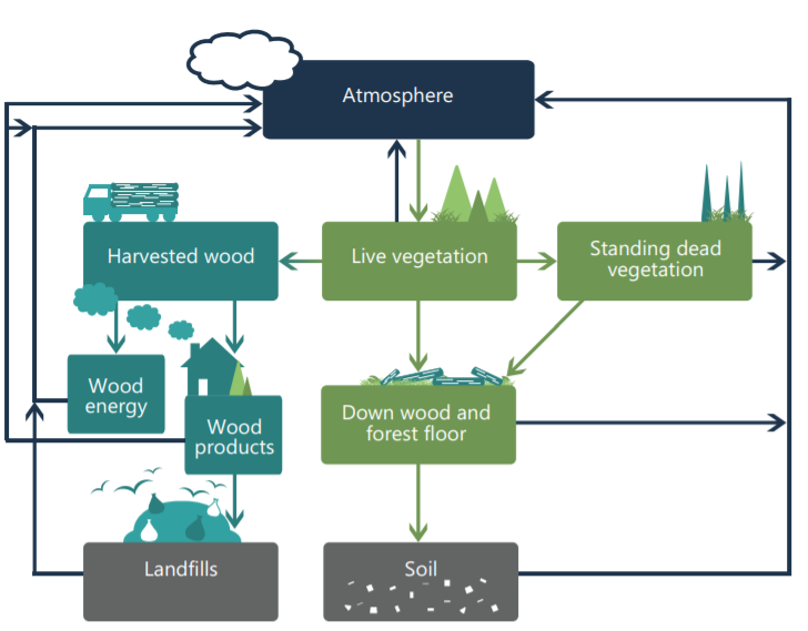 The forest sector carbon cycle includes forest carbon stocks and carbon transfer between stocks. Adapted from Heath et al. (2003) and USDA (2011).