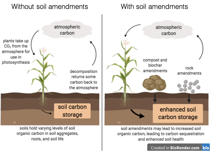 A schematic showing the difference between soils with and without amendments