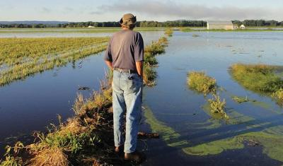 A farmer overlooks his flooded fields