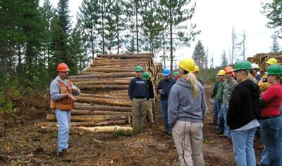 Forestry log camp