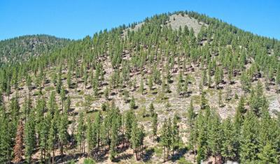 Reforestation in the Lake Tahoe area