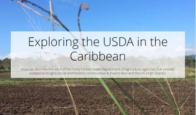 Exploring the USDA in the Caribbean
