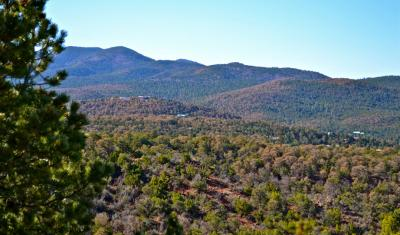 Piñyon decline in the Lincoln National Forest due to drought and insect infestations