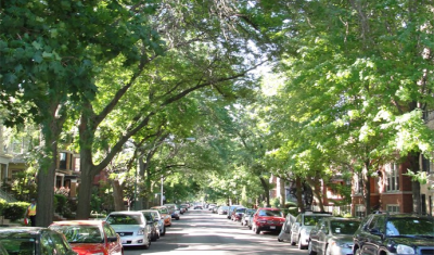 Neighborhood trees line a city street