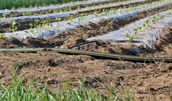 Irrigation lines at Intervale Community Farm