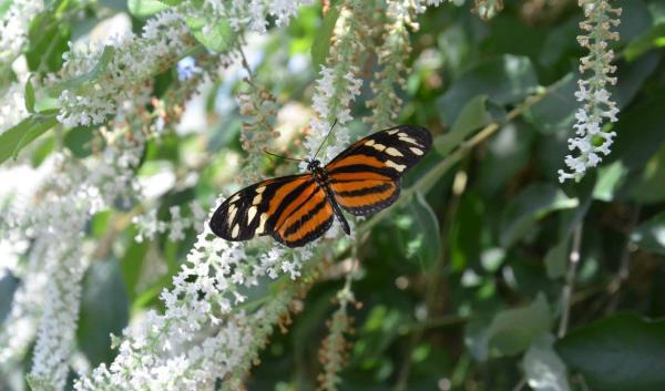 Photo taken at Reiman Gardens Butterfly Wing, Ames, IA