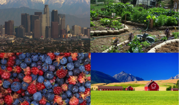 collage featuring: city, garden, berries, and a barn in a field