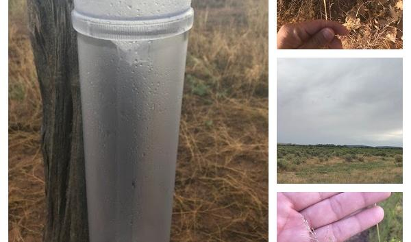 Rain gauge and native grasses