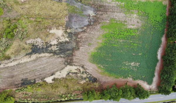 An aerial view of a farm field affected by saltwater intrusion. Gray areas of the field are where salt damage has occurred. Somerset County, Maryland.