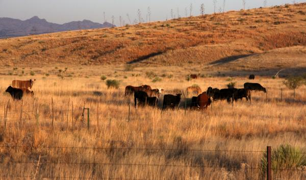 Rangeland in Cochise County, AZ