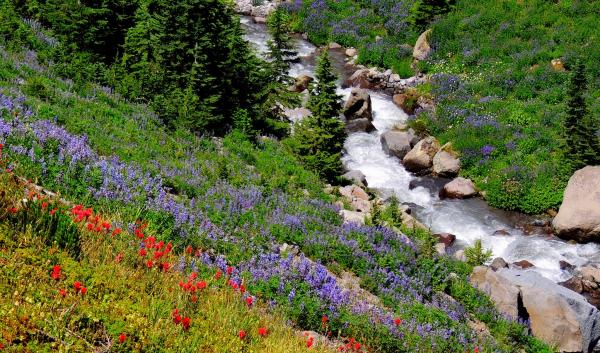 wildflowers next to stream in pacific northwest