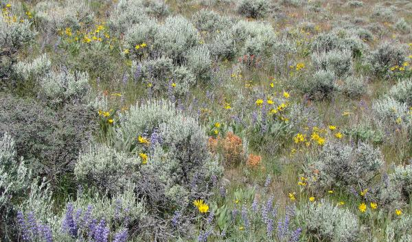 Rangeland ecosystems are diverse
