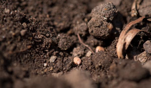 Soil conglomerates up close